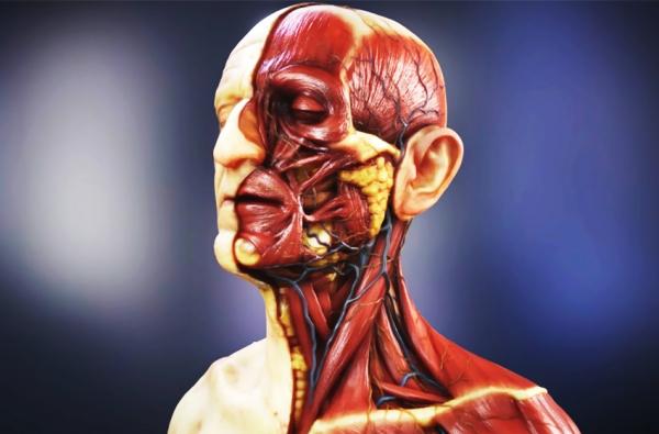 Kepala manusia