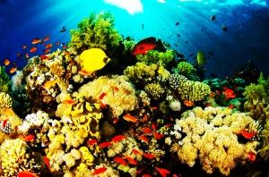 Pemandangan alam di Pulau Bunaken Teluk Manado Provinsi Sulawesi Utara